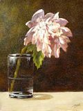 Single Peony In Glass